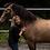 Thumbnail: Heldagsworkshop - HeartMath, Hästar & Självledarskap