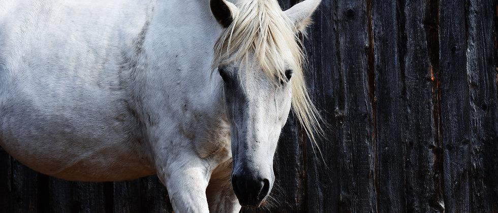 Workshop - Hästens roll vid utbrändhet, trauma och rehabilitering