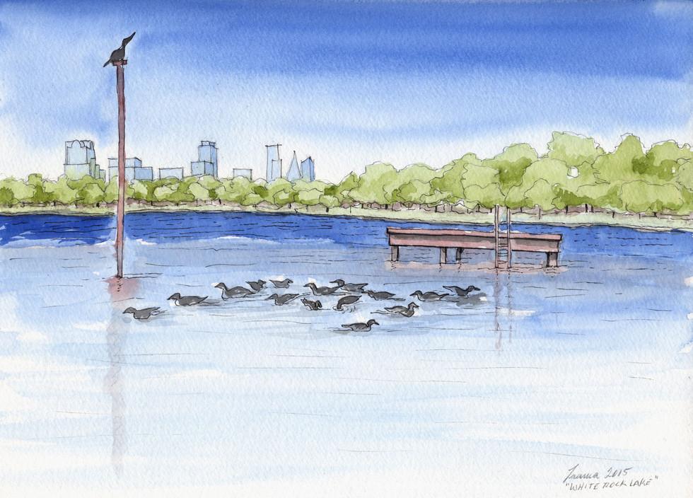 Ducks on White Rock Lake