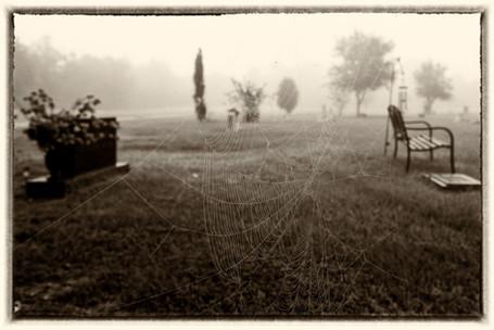 Graveyard Spiderweb
