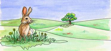 Rabbit on Bunny Hill