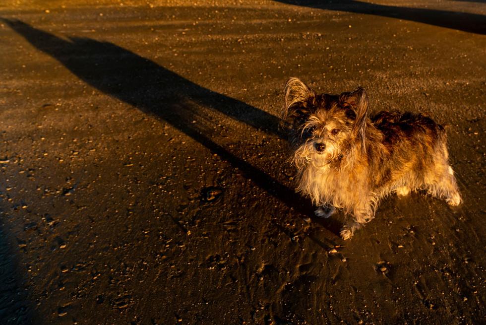 Tina's Long Shadow