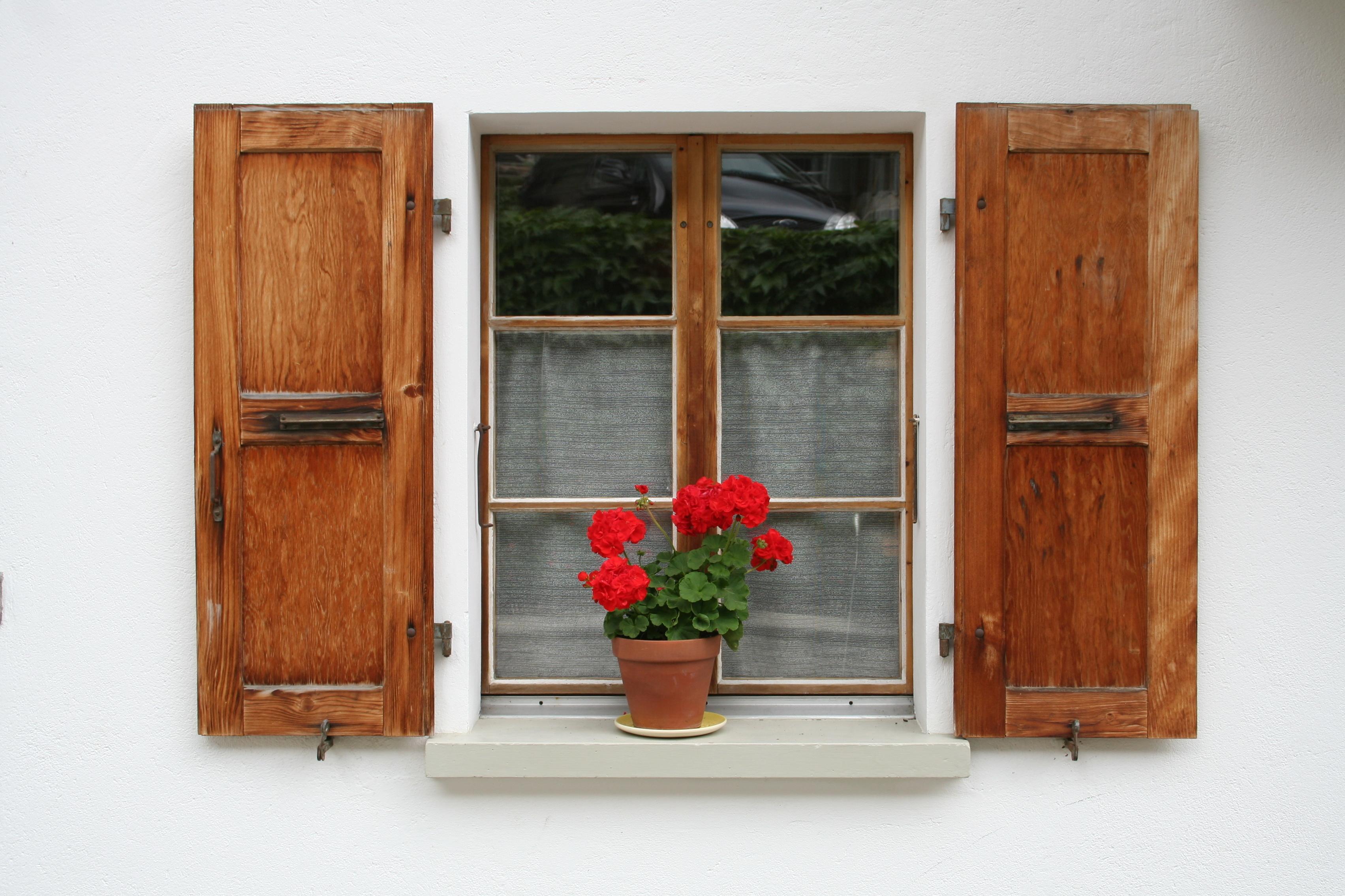 013_geraniums.jpg