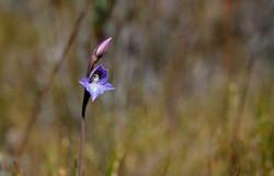 020_orchid 2.jpg