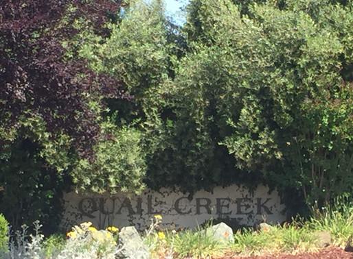 Quail Creek, Silicon Valley Outskirts