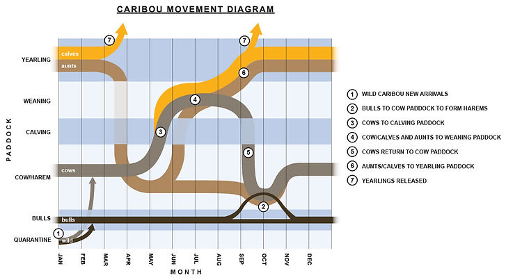 unique conservation diagram displaying animal movement/location through time