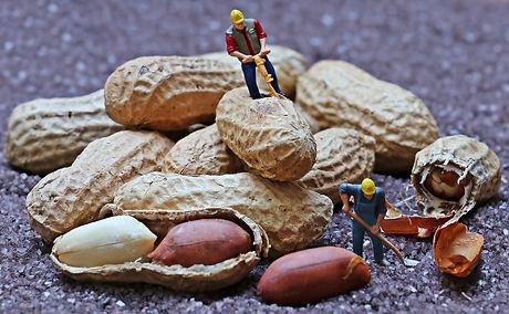 Working hard for peanuts.jpg