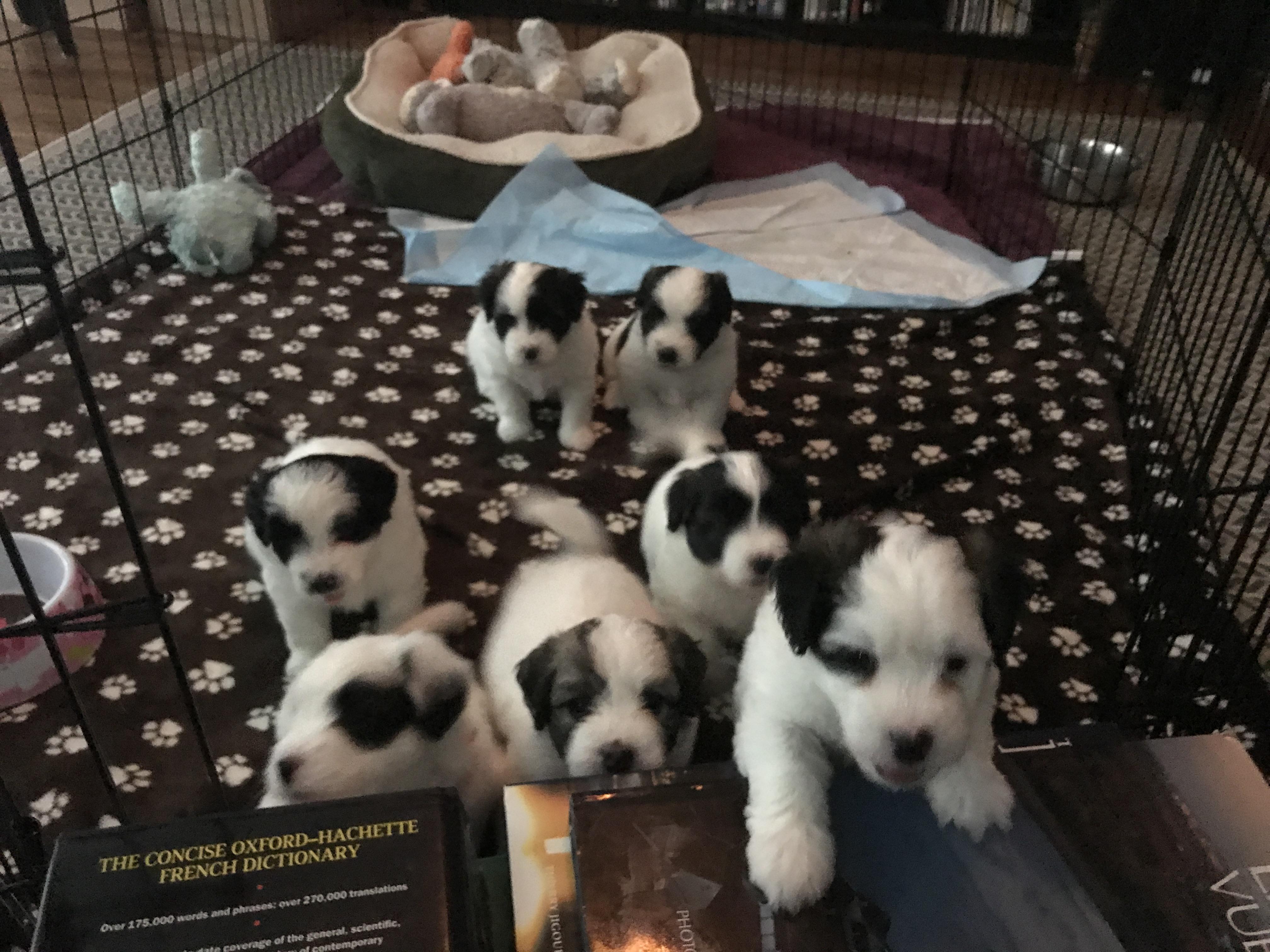 Cosette's pups