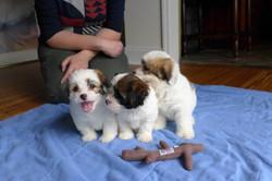 Buttercup, Amaryllis, Eddie