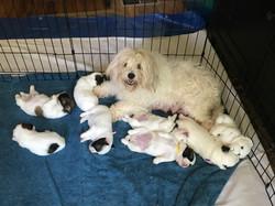 Mati's pups