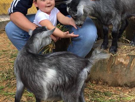 A 30 minutos de São Paulo: Interação com animais e muita diversão para as crianças.