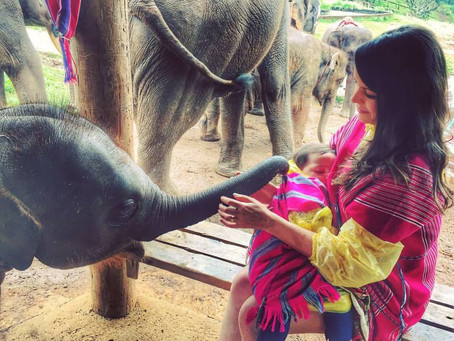 UM DIA COM ELEFANTES NA TAILÂNDIA