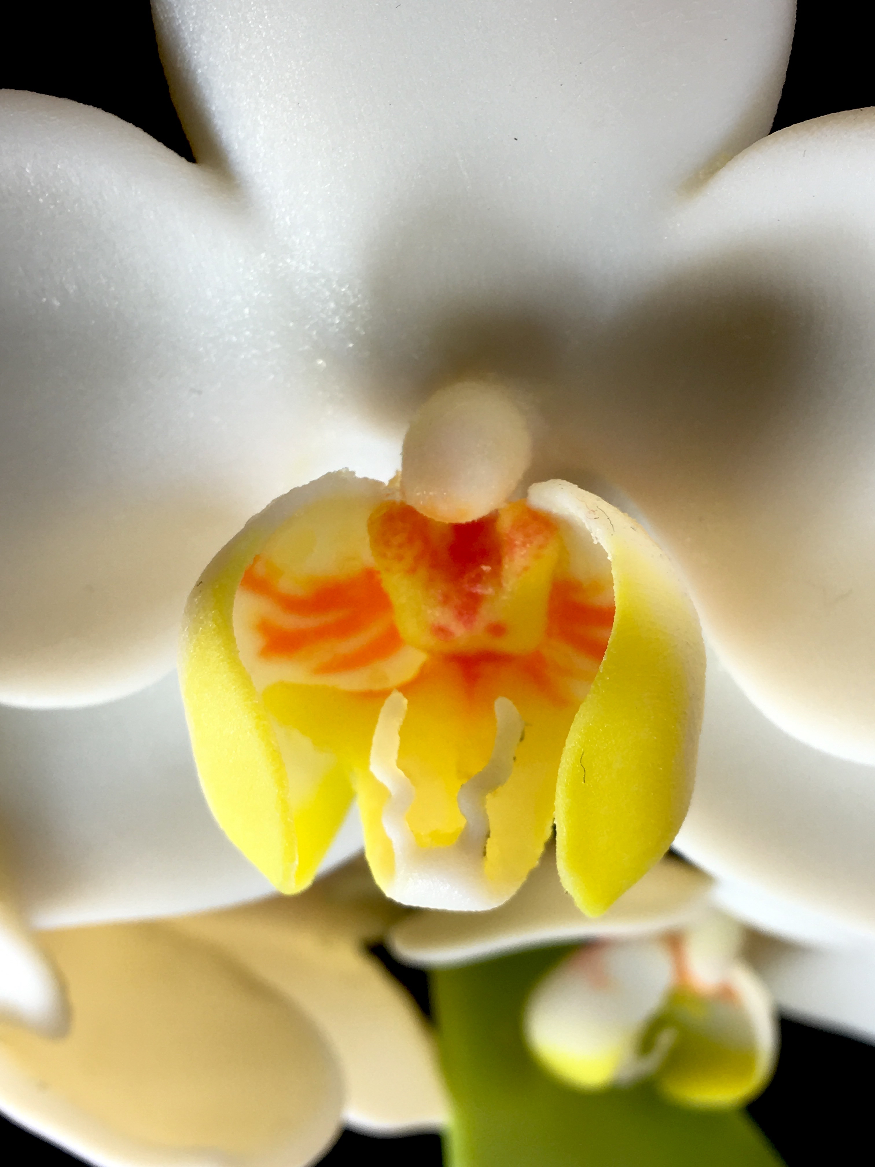 orchid3