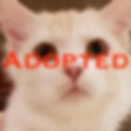 KW_Pinenut_adopted.jpeg