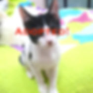 zara_adopted.jpg