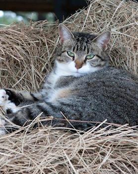 barn_cat-1530640862-7536.jpg