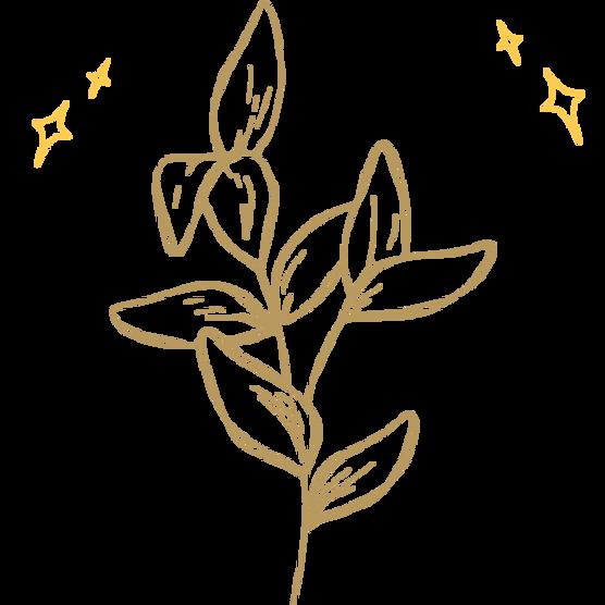 Plant Magic  (1).png