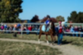 horseshow-118K.jpg