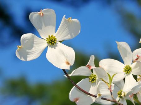 Spring has sprung...finally!