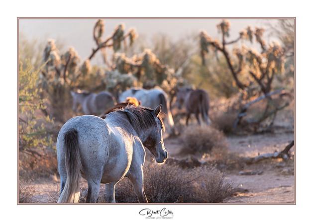 Desert Salties