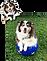 Dog + Anime 1.png