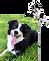 Dog + Anime 2.png