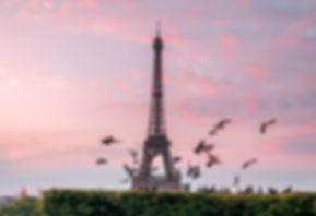 PARIS EIFFEL TOWER SUNRISE BIRDS PIGEONS