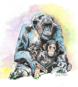 Chimpanzees of Gombe