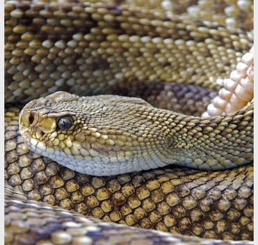 Snake & Small Reptile Removal