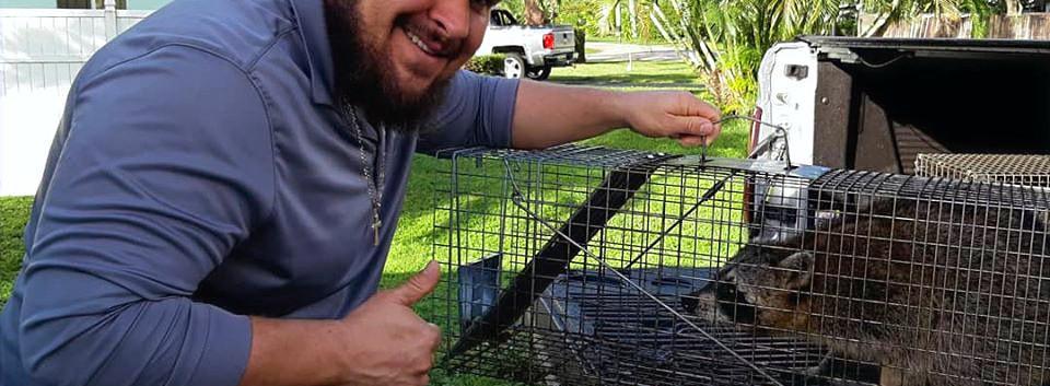 Raccoon_edited.jpg