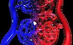 Aiartex per la circolazione capillare stoplombalgia.com