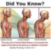 spine posture