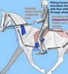 a graphic depicting some horse riding exercises