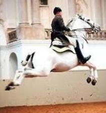 a horse rider riding his stallion