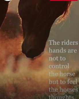 how to exercise control over a horse