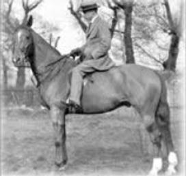 a horse riding exercise