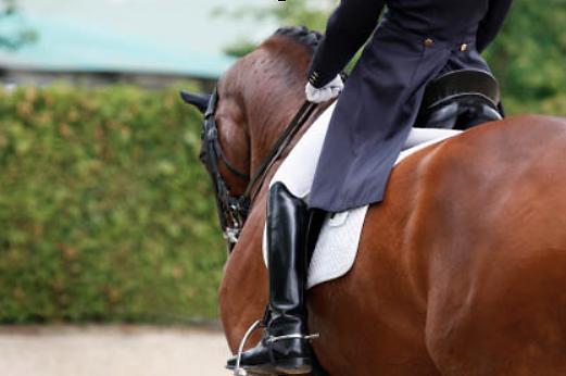 alexander technique horses