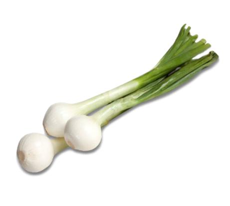 Oignons Frais / Frische  Zwiebeln