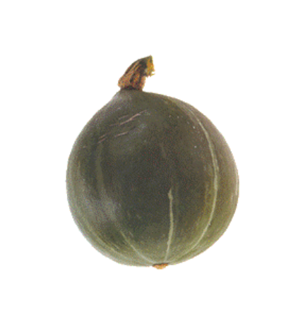 Courge Olive