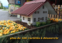 Courge Deco Divers