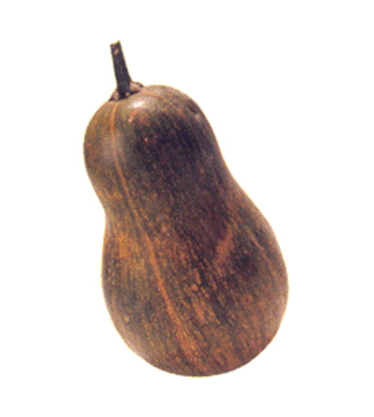 Sucrine du Berry