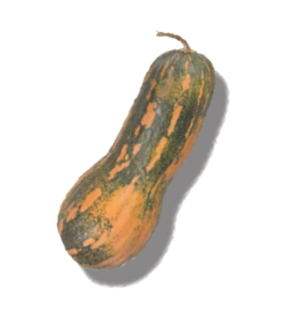 Muscatnaya