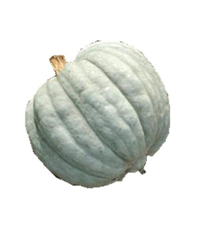 Cirula Pataka