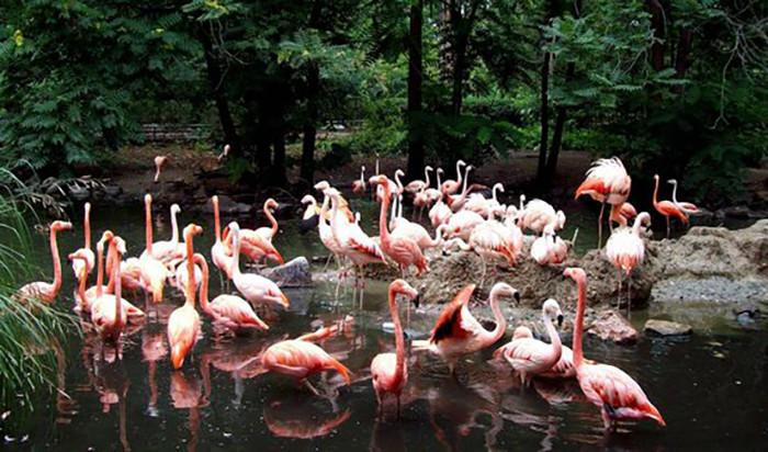Flamingos at the Denver Zoo