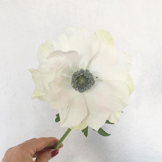 Missi Flowers 6