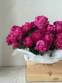 Missi Flowers 43