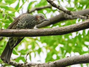 山田池公園の野鳥日記(2020年10月11日)