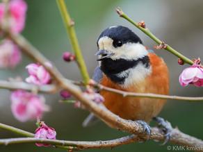 山田池公園の野鳥日記(2021年2月27日)