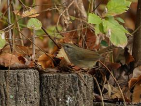 山田池公園の野鳥日記(2020年11月29日)