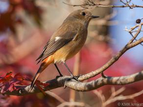 山田池公園の野鳥日記(2020年12月5日)
